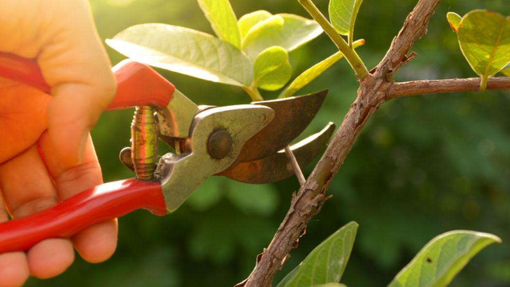 Aprende cómo y cuando debes realizar la poda de los árboles para tener un jardín fabuloso y cuidado.