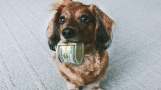 Un perro sujetando billetes con su boca.