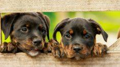 Dos perros cachorros.