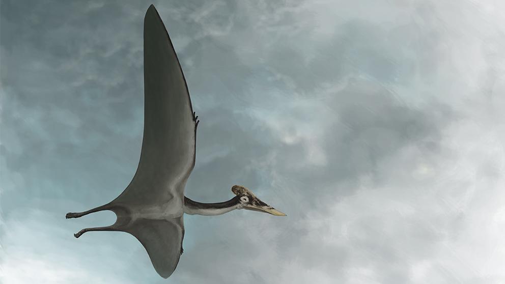 El Museo de los Dinosaurios Altmühltal exhibe un verdadero Drácula, el pterodáctilo más grande y robusto jamás encontrado