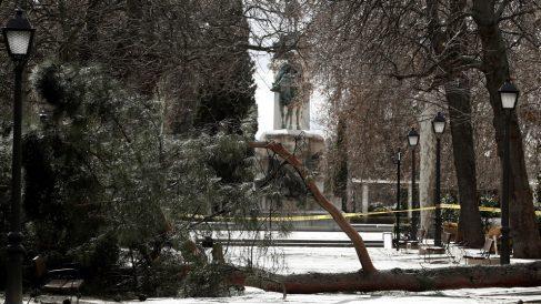 Árbol derribado por el viento en el parque del Retiro. (Foto: EFE)