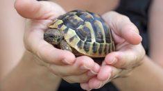Pasos para cuidar a las tortugas de agua dulce