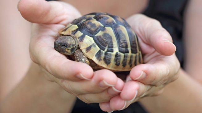 Cuidar a las tortugas de agua dulce
