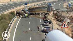 Varios elefantes bloquean la carretera tras el accidente.