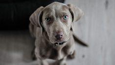 Pasos para desparasitar perros correctamente con remedios naturales