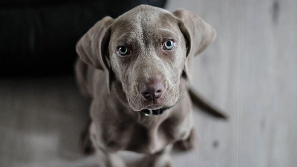 remedios caseros para eliminar parasitos internos en los perros