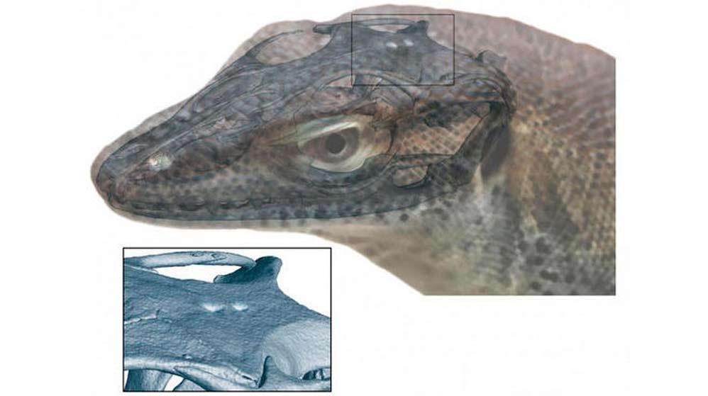 Un lagarto fuera de común