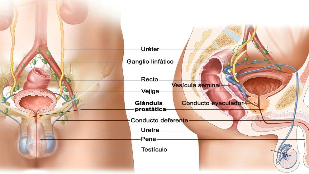 próstata agrandada 50 años