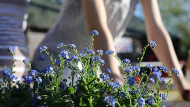 Cómo hacer un cataplasma casero con plantas medicinales
