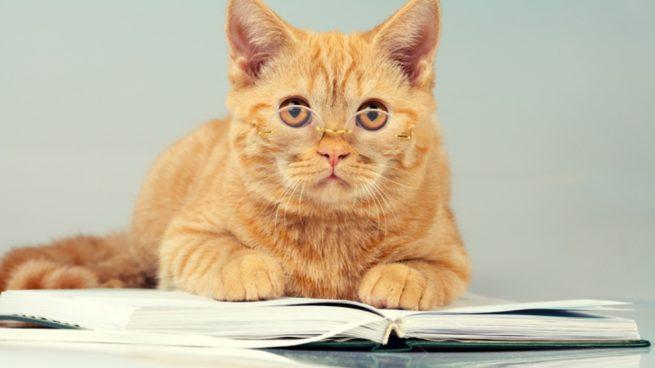 Educar a un gato de forma correcta