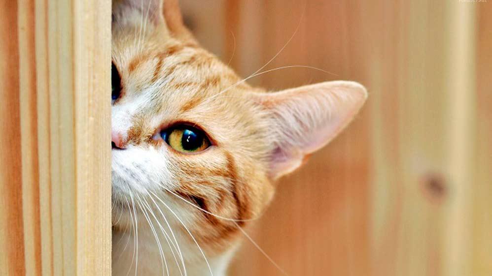 Unos animales con un sistema auditivo envidiable