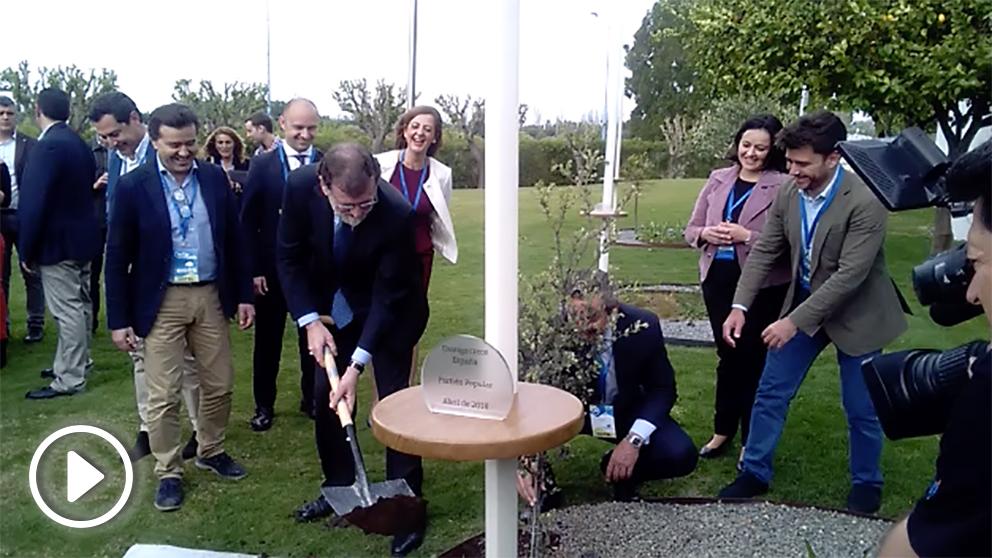 Rajoy, plantando una encina en la Convención Nacional del PP.