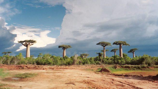 Propiedades baobab
