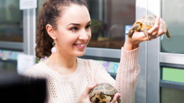 Cómo cuidar a las tortugas de agua dulce