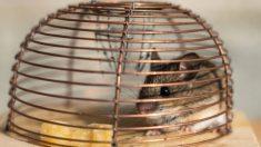 Guía para hacer trampas para ratones paso a paso