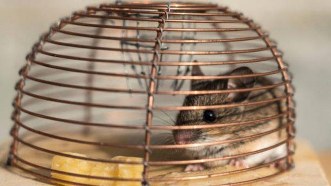como hacer trampas para ratones paso a paso (1)
