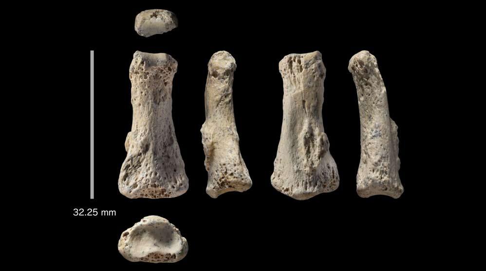 Fósil encontrado en el desierto de Nefud (Ian Cartwright)