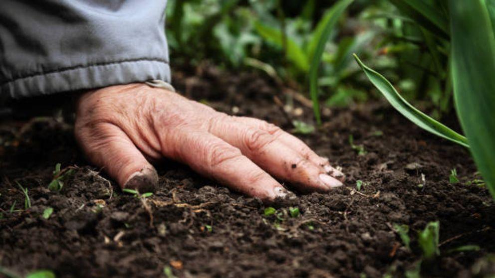 Pasos para saber cómo colocar mantillo en el jardín