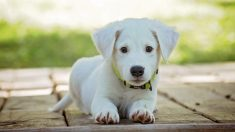 Aprende a desparasitar perros fácilmente y de forma natural.