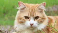 Aprende a educar a un gato correctamente con estos pasos.