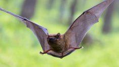 Los murciélagos patrullan la ciudad
