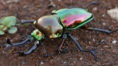 Esta es la razón por la que a los escarabajos les gusta el alcohol