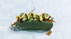 Perrito caliente sin carne y hecho de microalgas (Foto: Space 10)