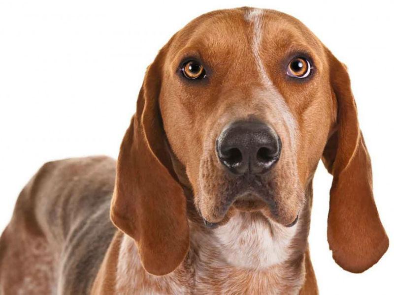 razas de perros