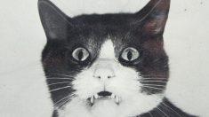Pillado el gato que transportaba móviles a una cárcel