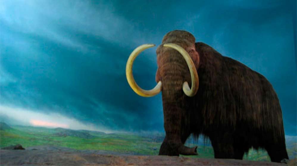 Planean clonar mamuts a partir de embriones artificiales (2)