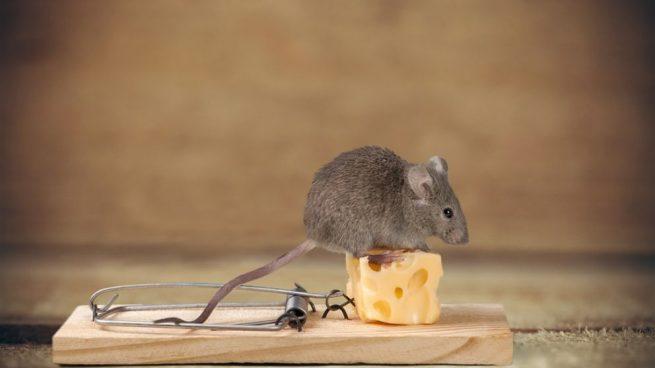 C mo hacer trampas para ratones paso a paso y f cilmente - Construir trampa para ratas ...