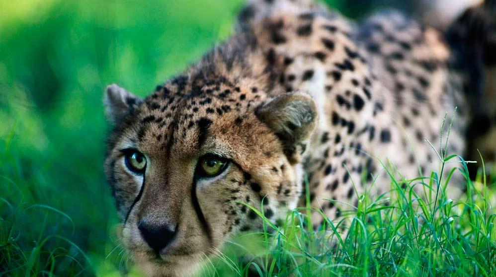 La mejor forma de evitar que otros depredadores les roben la comida
