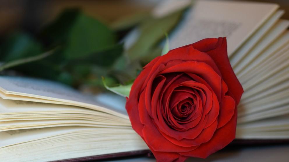Feliz Sant Jordi 2020 Frases Para Felicitar El Día Del Libro