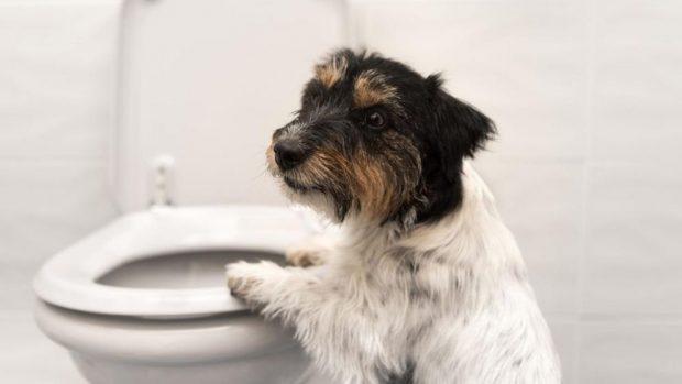 remedios para la diarrea en perros