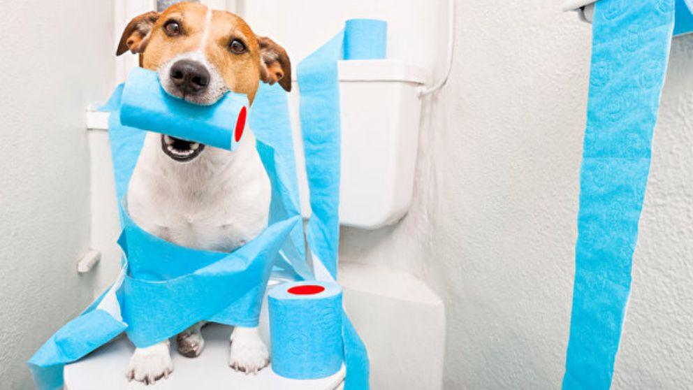 Remedios caseros para tratar la diarrea en perros.