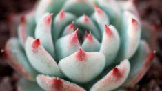Todos los pasos para plantar y cuidar suculentas