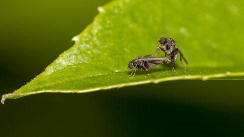 Fabrica tu propia trampa para moscas paso a paso.