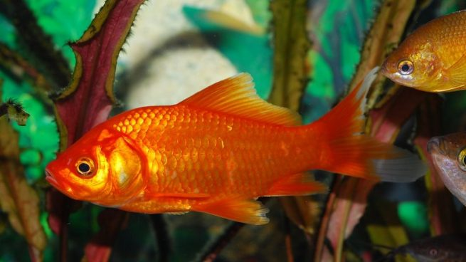 Resultado de imagen para un pez