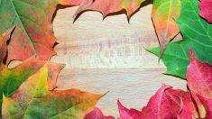 Pasos para pintar cuadros con hojas