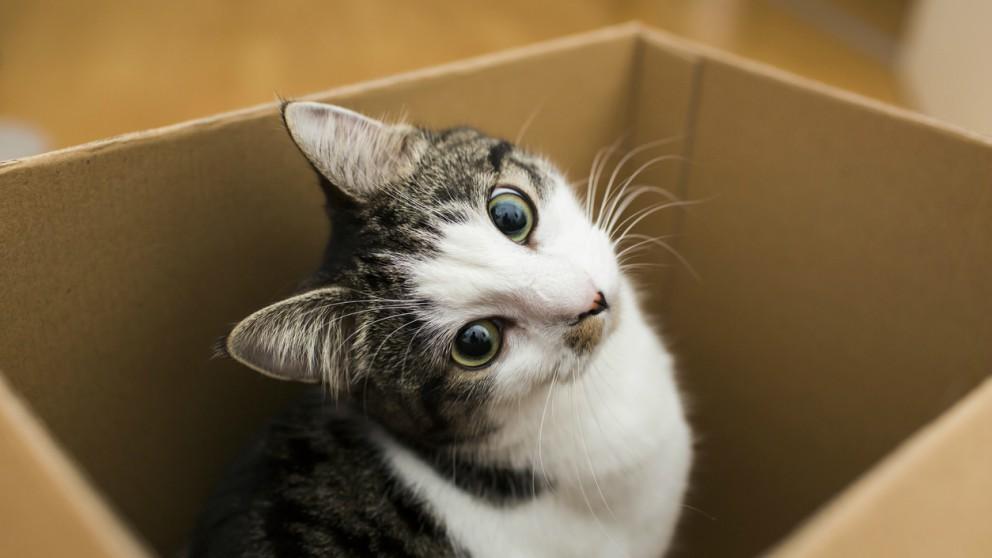 El gato de Schrödinger: ¿En qué consiste?