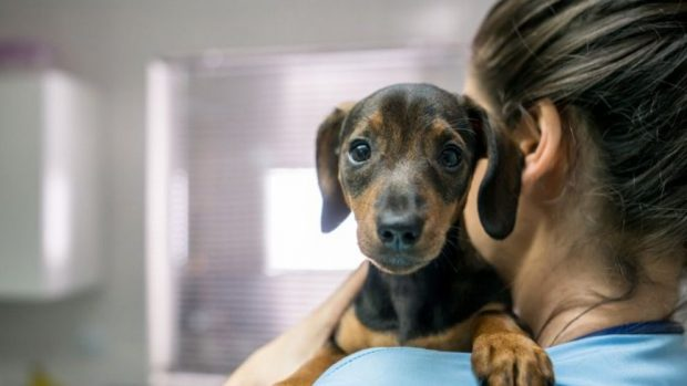 Masaje cardíaco a tu perro
