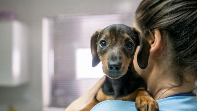 preparar a tu perro para ir al veterinario