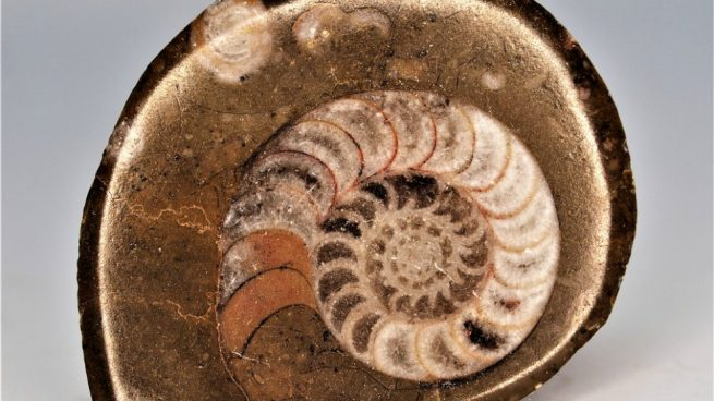 Conoce el pasado de La Tierra gracias a los fósiles.