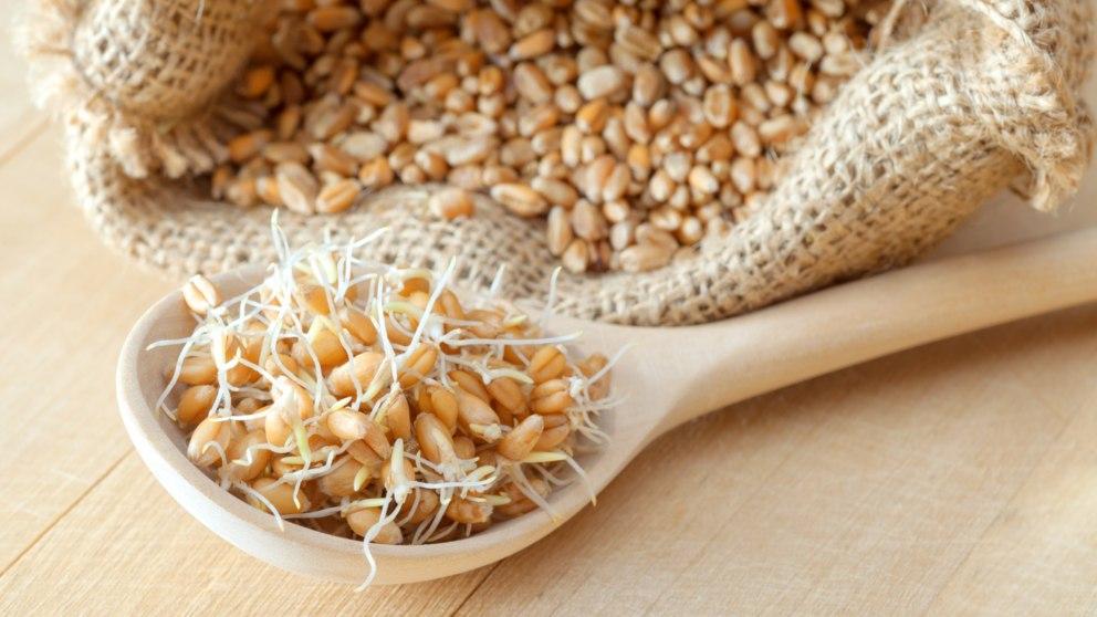 El germen de trigo aporta los nutrientes completos de este cereal.