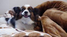 Pasos para hacer una cama para perros cómoda