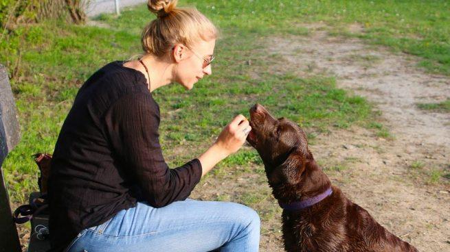 Los perros aportan muchos beneficios
