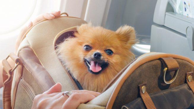 Preparar a tu perro para viajar