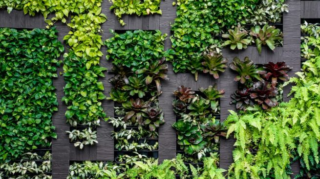C mo hacer un jard n vertical paso a paso for Jardin vertical exterior