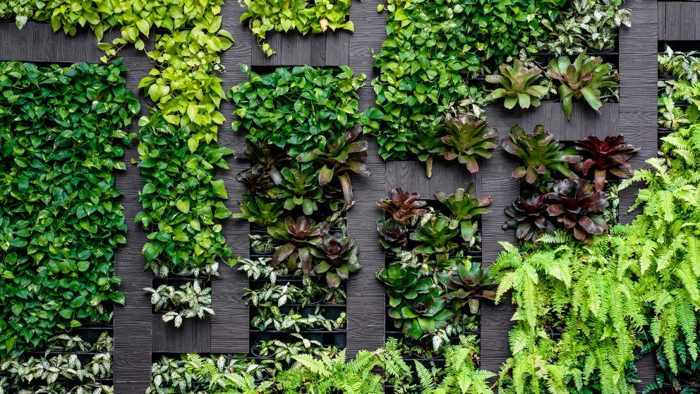 Pasos para hacer un jardín vertical