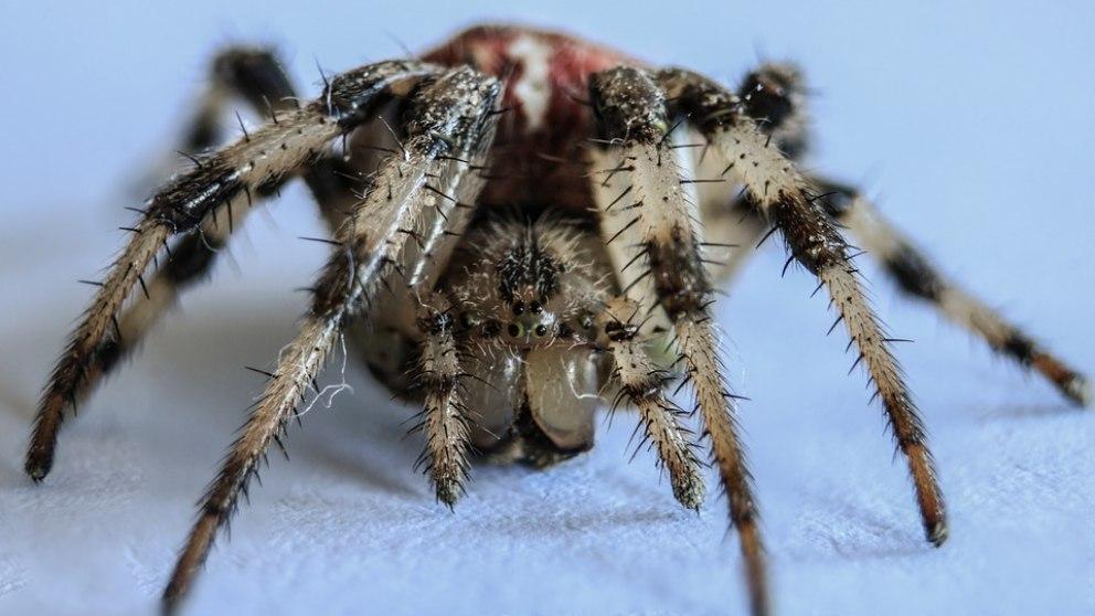 ¿Tienes fobia a las arañas? Descubre cómo tratar la aracnofobia.